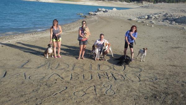 Voluntarios con los perros