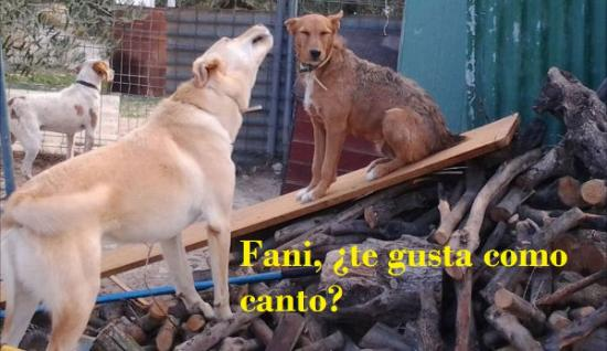 Amor entre Fany y Lucky