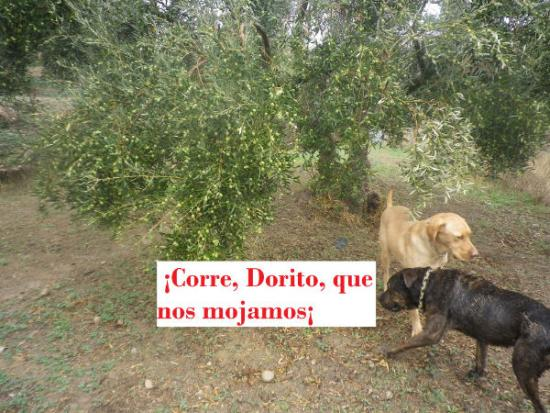 Corre Dorito!